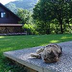 къщи за гости Тетевен, къщи за гости в планината